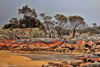 Bay Of Fires 2 Poster by Wallaroo Images