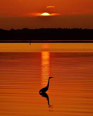 Bayside Ripples - A Heron Takes An Evening Stroll As The Sun Sets Behind The Clouds On The Bay Poster