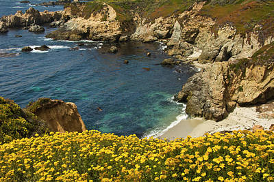Beach And Cove, Garrapata State Park Poster by Michel Hersen