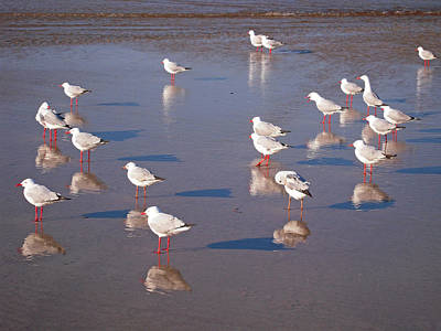 Poster featuring the photograph Beach Birds 2 by Ankya Klay