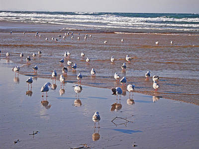 Poster featuring the photograph Beach Birds 4 by Ankya Klay