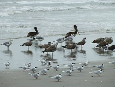 Poster featuring the photograph Beach Birds by Judith Morris