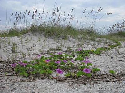 Beach Flowers Poster