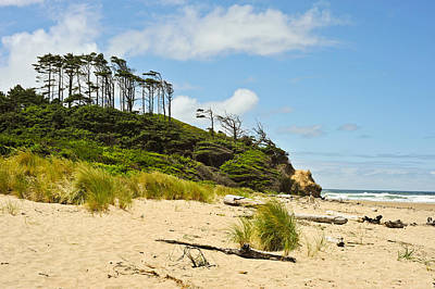 Poster featuring the photograph Beach Forest by Crystal Hoeveler