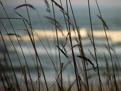 Poster featuring the photograph Beach Grass by Kimberly Mackowski