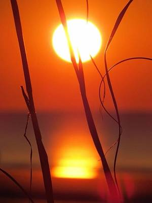 Beach Grass Sunrise Poster