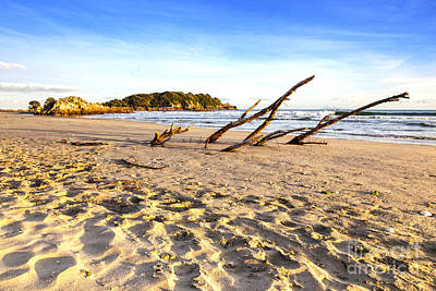 Beach Mount Maunganui New Zealand Poster by Colin and Linda McKie