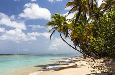 Beach Pigeon Point Tobago West Indies Poster by Konrad Wothe