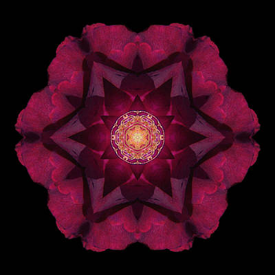 Beach Rose I Flower Mandala Poster