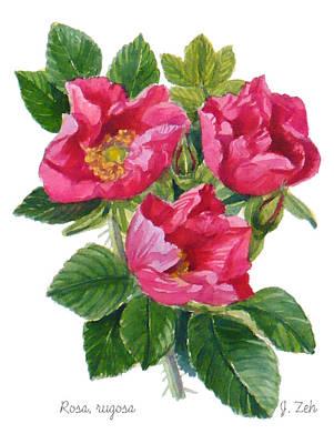 Beach Roses -  Rosa Rugosa Poster