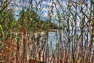 Beach Thru The Tall Grasses Poster by Michael Thomas