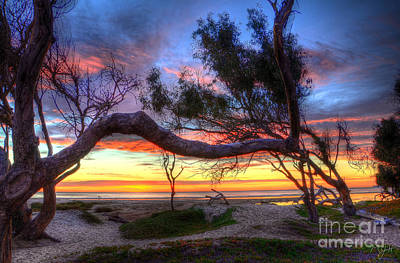 Beach Tree Sunset View Poster