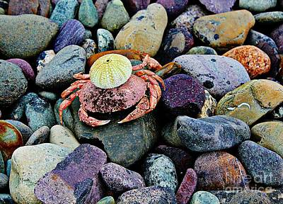 Beach Wares - Egghead Crab Poster by Barbara Griffin