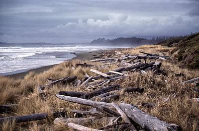 Beached Driftlogs Poster