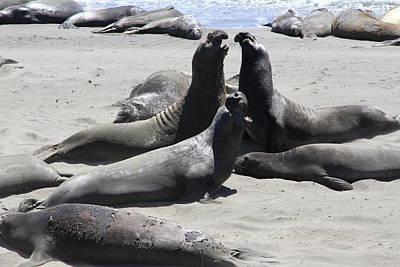 Beachmasters - Elephant Seals Poster