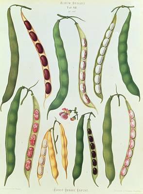 Beans Poster by Ernst Benay