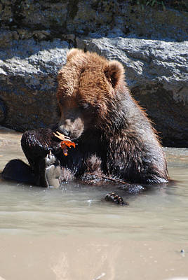 Bear Cub Poster by DejaVu Designs