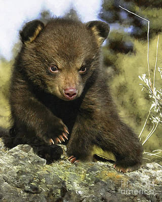 Bear- Cub Poster by Wildlife Fine Art