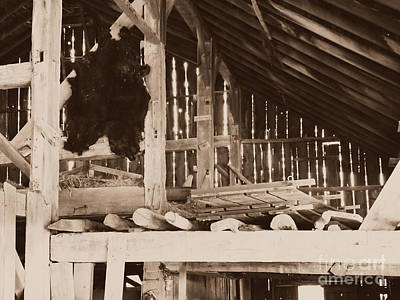 Bear Pelt Drying In Old Barn Poster by Deborah Fay