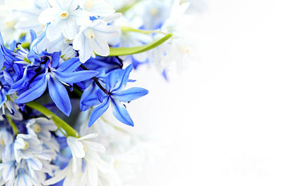 Beautiful Blue White Flower Poster by Boon Mee