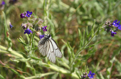 Beautiful Butterfly In Vegetation Poster