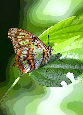 Beautiful  Butterfly In Mexico Poster by Maria isabel Villamonte