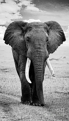 Beautiful Elephant Black And White 17 Poster by Boon Mee