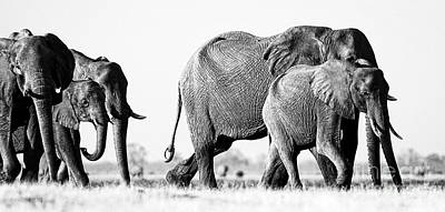 Beautiful Elephant Black And White 55 Poster by Boon Mee