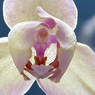Beautiful Orchid Poster