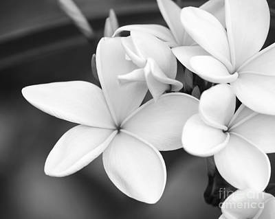 Beautiful Plumeria In Black And White Poster