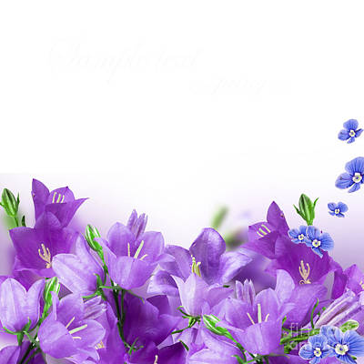 Beautiful Purple Flower Frames Poster by Boon Mee