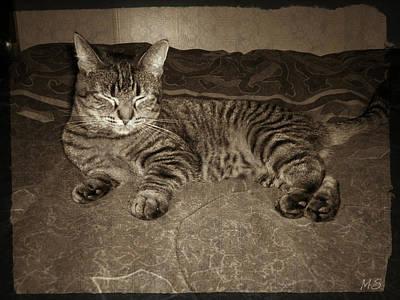 Beautiful Tabby Cat Poster by Absinthe Art By Michelle LeAnn Scott