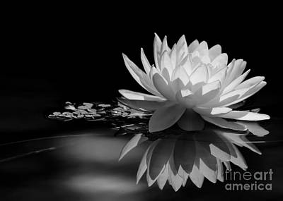 Beautiful Water Lily Reflections Poster