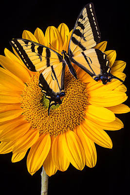 Beautiful Wings On Sunflower Poster