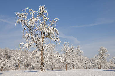 Beautiful Winter Day With Snow Covered Trees And Blue Sky Poster