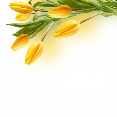 Beautiful Yellow Flower Poster by Boon Mee