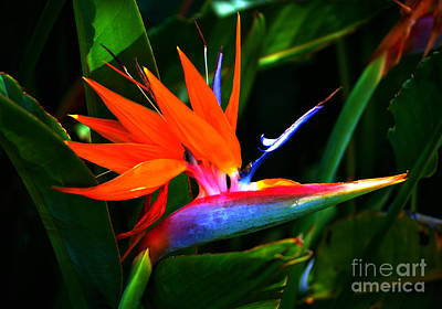 Beauty In Paradise - Bird Of Paradise Poster by Susanne Van Hulst