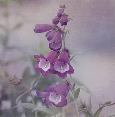 Beauty In Purple Poster by Kim Hojnacki
