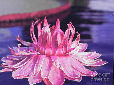 Beauty Of Pink At The Ny Botanical Gardens Poster by Chrisann Ellis