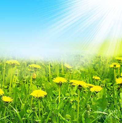 Beauty Summer Flowers Poster