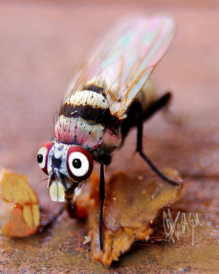 Poster featuring the photograph Beaver Tooth Fly by Chris Fraser