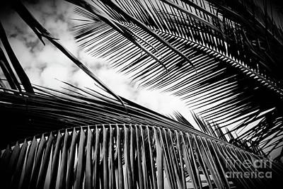 Poster featuring the photograph Maui Paradise Palms Hawaii Monochrome by Sharon Mau