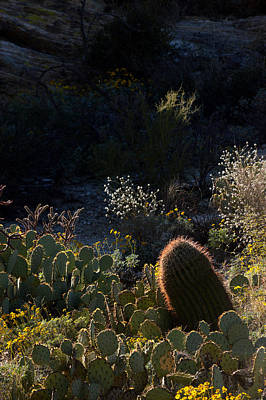 Bed Of Cactus Poster