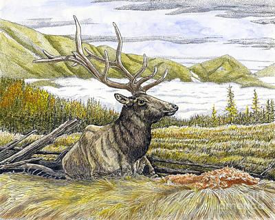 Bedded Elk  Poster