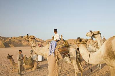 Bedouins And Their Camels Poster
