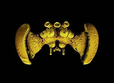 Bee Brain Poster by Dan Sykes/natural History Museum, London