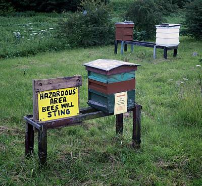 Bee Hives Poster by Robert Brook