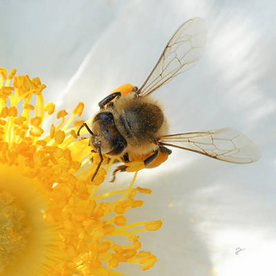 Bee-u-tiful Squared Poster by TK Goforth