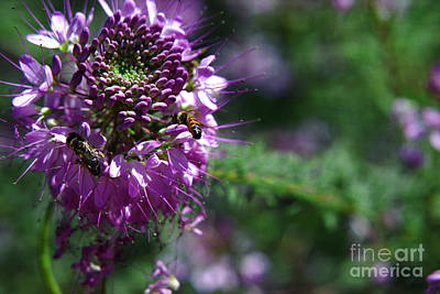 Bees In Purple Poster