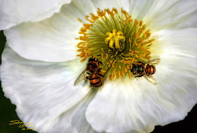 Bees On A Flower Poster